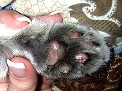 update on Kashim paws