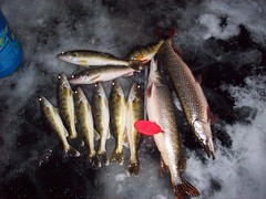darling ice fishing (Paul Schumann) Tags: lake ice fishing perch darling walleye schumann