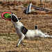 frisbee image, photo or clip art