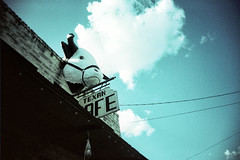 texan afe (s myers) Tags: blue statue 35mm lens toy cow xpro crossprocessed texas fuji crossprocess plastic taylor vignetting vignette myers staci velvia50 vivitarultrawideandslim smyers photoworkssf vuws puppiesofpurgatory