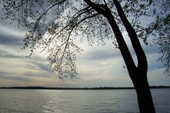 Volga at Samara (shotlandka) Tags: tree silhouette river geotagged russia volga samara       saveearth platinumheartaward