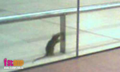 Shocking to find rat at Changi Airport's T3!