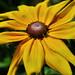flowershow2009 074
