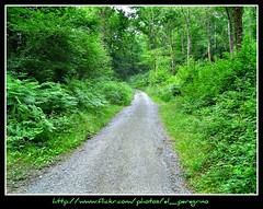 Lasciata Lacomande per Oloron Saint-Marie - Leaving Lacommande and going to Oloron Saint-Marie (El Peregrino) Tags: wood france verde green path vert sentiero francia bois bosco camminodisantiago chemindesaintjacques lacommande gr653 viatolosana