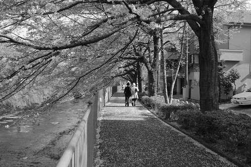 町田樹 画像3