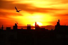 The sunset last night (jamiejayw) Tags: sunset clouds brighton rooftops eveninglandscape