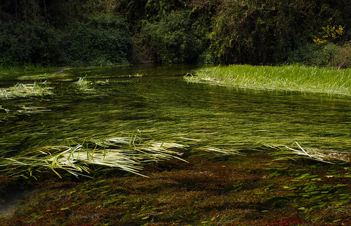 ผืนน้ำเขียวขจี