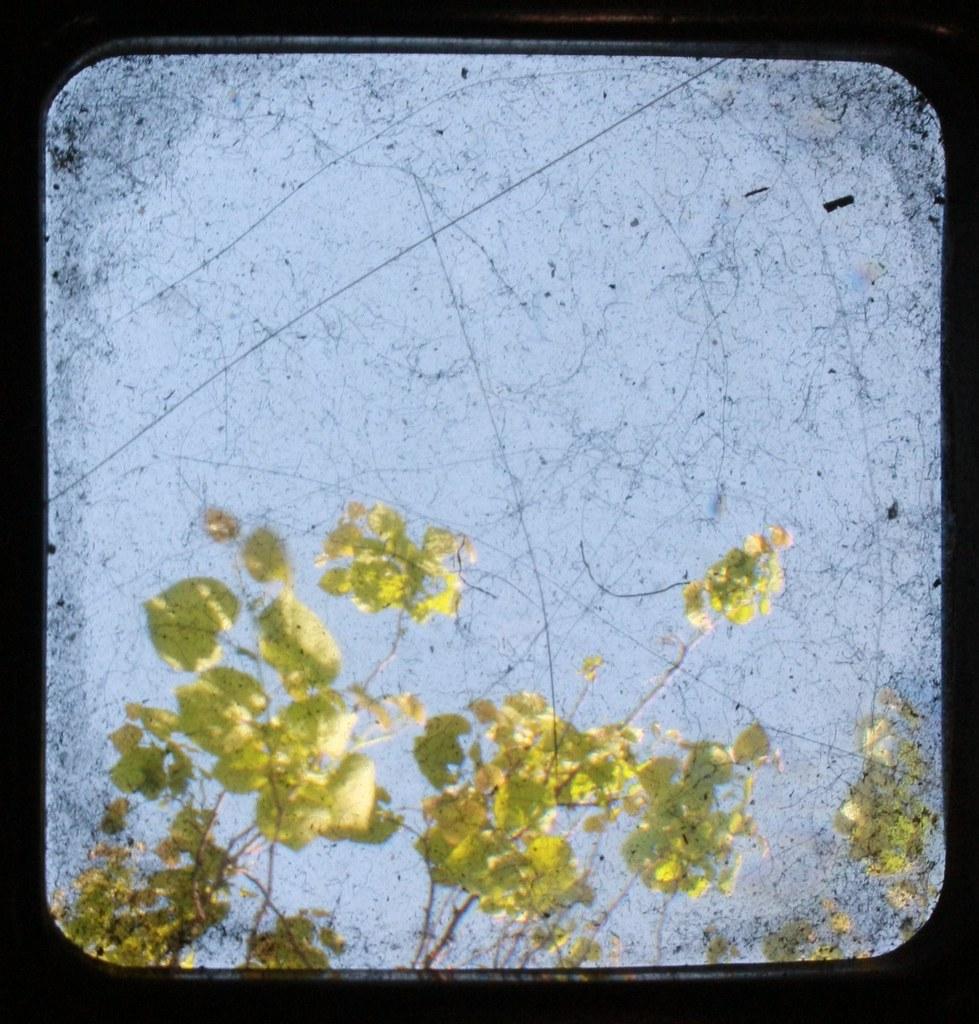 dirty leafs....