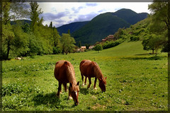 """amicizia"" (gigi 62) Tags: italy verde green landscape nokia san italia antonio cavalli borgo marche paesaggio monti macerata pascoli sibillini coth visso n82 clickcamera theperfectphotographer landscapesdreams vosplusbellesphotos"