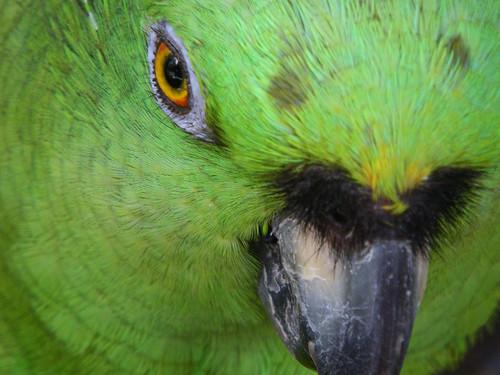 parrot wild bird center