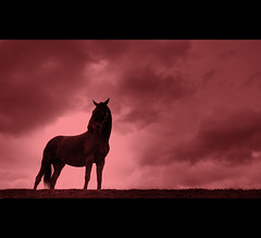 The statue stands and stares ahead, and not a thought runs through his head, the draught is drunk, the walls are red, eternity beyond. (Martyn Starkey) Tags: horse clouds photography still starkey martyn shilouette mywinners vosplusbellesphotos