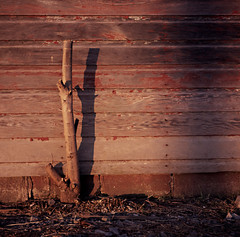 Last Tree (bap0181) Tags: red usa newyork barn rural outdoors photography death us day scenic upstate nopeople treetru