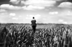 Keep Walking - Explored No.24 (geeo123) Tags: summer sky people white black hot macro june canon photography focus dof wheat framing midday boken 40d geeo123