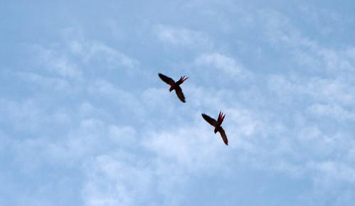 Parque Nacional Corcovado-012