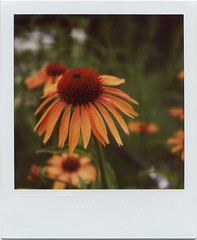 The High Line #5 (davebias) Tags: park nyc polaroid sx70 600 highline