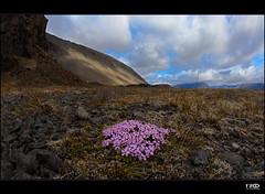 Moos (Monika Ostermann) Tags: cloud sun clouds iceland moss volcanic dosh abigfave theunforgettablepictures monikaostermann