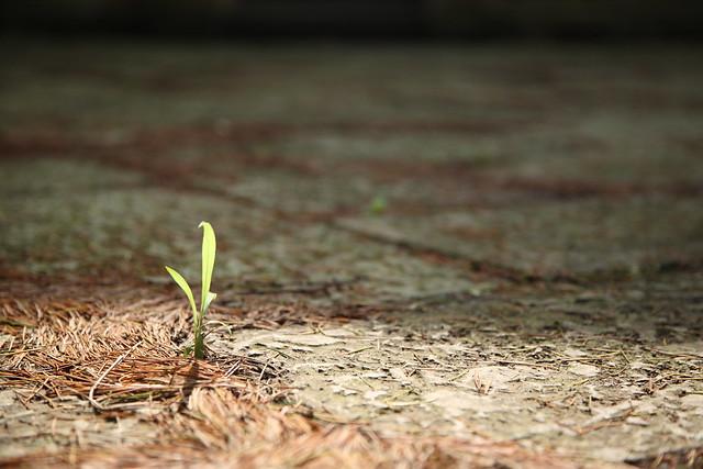 タイルの新芽