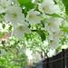 Spring Walk. by ekh75