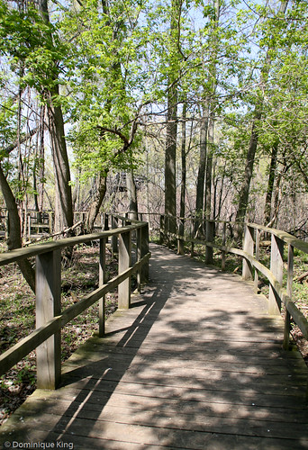 Magee Marsh, Ohio wildlife refuge-1