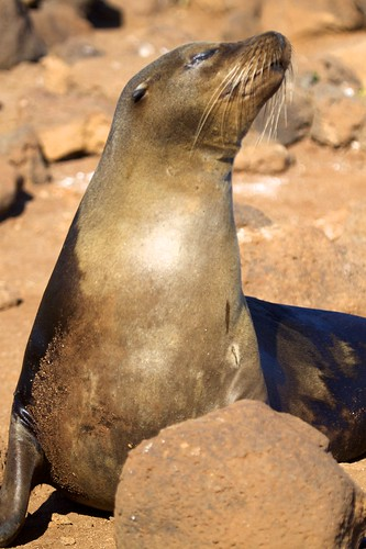 Sea Lion Strikes a Pose