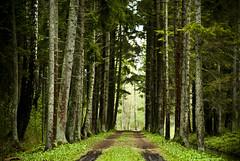 The Forest Path (A. Aleksandravičius) Tags: trees tree nature forest landscape nikon path tamron lithuania 70300 d60 lietuva tamron70300 gamta kelias nikond60 miškas medžiai burbiškiodvaras burbiškis