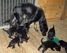 Hunde - 26 (Manfred Lentz) Tags: pets dogs puppy pups puppies hunde littledogs welpen hündchen babydogs whelps