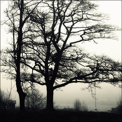 the Swing (*Kicki*) Tags: mist tree silhouette fog square nikon sweden schweden nikond100 monotone swing sverige d100 mb träd 2010 gunga monocrome dimma svartvitt kicki uppland roslagen grisslehamn väddö svenskaamatörfotografer kh67