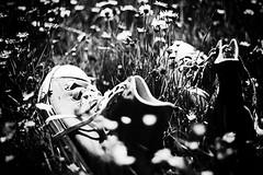 Converse Chucks (ugod) Tags: bw white black flower grass digital canon garden eos rebel 50mm grey star backyard shoes all meadow wiese grau converse taylor daisy chuck sw gras f18 50 grassland allstar chucks ef schwarz 14000 gnseblmchen weis canonef50mmf18ii xti 14000s 400d canoneos400d canondigitalrebelxti