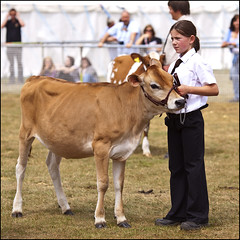 A Jersey Calf (strussler) Tags: england girl canon eos surrey jersey guildford calf surreycountyshow ef135f2l 5dmkii dontforgetneda zoeclear