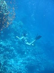 137_3727 (LarsVerket) Tags: egypt snorkling fisk undervannsfoto
