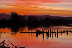 sunrise over Columbia River and Mt. Hood (dannotti) Tags: morning trees mountain reflection nature water sunrise river landscape dock nw columbia columbiariver mthood pacificnorthwest daybreak washougal supershot
