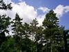 S4026170 (pappgabor) Tags: zoo veszprém 2007
