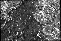 above the river (Alexander Alekseenko) Tags: bw texture film ice analog river photo with asahi pentax kodak 400 scanned epson spotmatic perfection v200 c41 profoto helios442