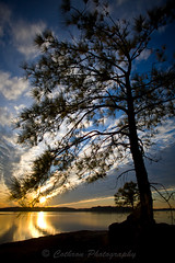 Reaching for the sky.. (John Cothron) Tags: winter sunset sky usa cloud sun lake cold color reflection tree nature water silhouette digital canon georgia landscape us twilight unitedstates outdoor dusk unitedstatesofamerica scenic reservoir thesouth dixie eveninglight buford lakelanier hallcounty americansouth img7933 reachingforthesky flowerybranch southernregion 35mmformat 5dc vanpughpark johncothron southatlanticstates 5dclassic cothronphotography johncothron