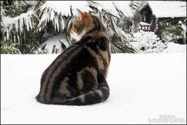 Snow 19