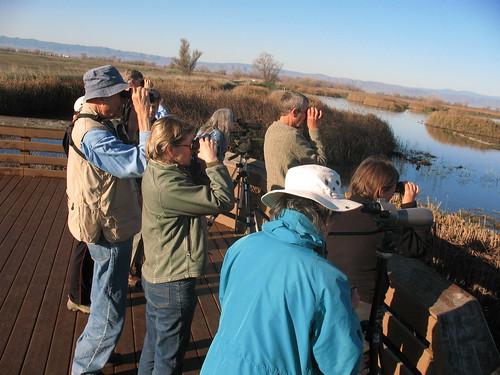 Birders at the Colusa Wildlife Refuge