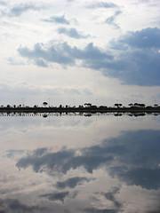 molentargius pond (fotoec) Tags: sardegna pond sardinia cagliari molentargius stagno