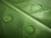 Inside (Jenn (ovaunda)) Tags: macro green leave water lines utah droplets drops sony refraction cedarcity dsch5 pfosilver jennovaunda ovaunda