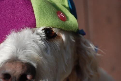 dog makeover 014