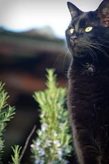 Clementina Standing (liquene) Tags: cat chat gatos gato gata felino felini gatto gatti katz micio micia gatta