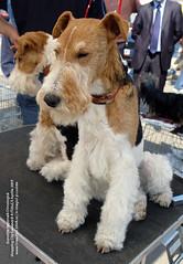 5 Aprilie 2009 » Expoziţia Naţională Chinologică