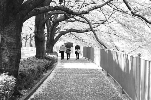 町田樹 画像13