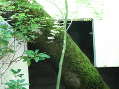 IMG_4253 (susanmacartney) Tags: tree mossy trinitycathedralsacramento