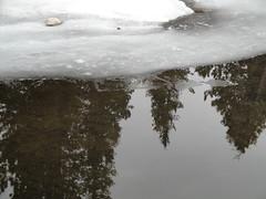 Turn your world upside down :) (Emmy32) Tags: lake reflection water frozen upsidedown tress emmy32