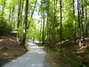 bosco di arboretum