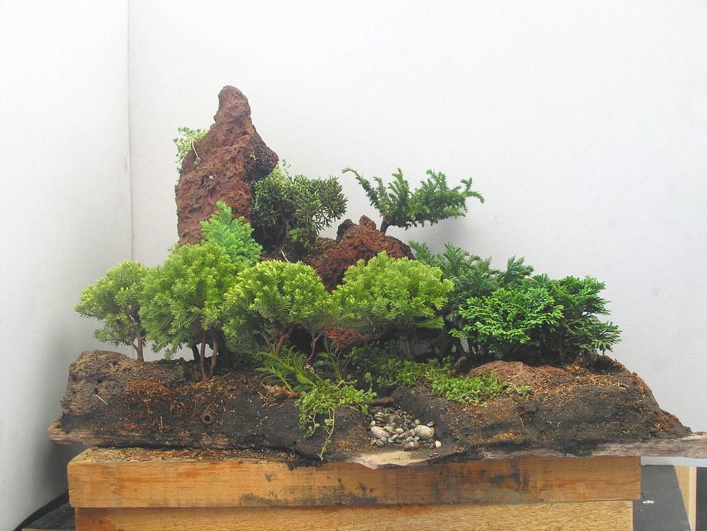 Elaboracion de Bosque de Coniferas - Foro de InfoJardín
