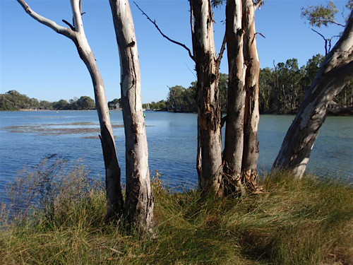 At the Murray-Darling confluence