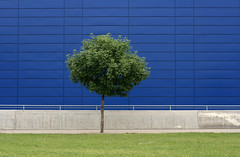 Deep Blue & Green (sonofsteppe) Tags: life street city blue urban detail building tree green nature grass leaves metal wall modern concrete 50mm grey daylight stand spring hungary alone exterior place outdoor background budapest nobody foliage explore simplicity lush minimalism simple exploration minimalist individual revisited wallscape sonofsteppe pusztafia foliature urbanlifeoftrees
