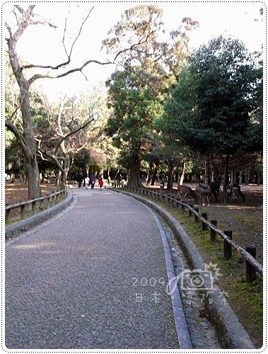 春日大社 (1)
