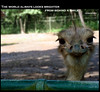 A smile is a curve that sets everything straight. ~Phyllis Diller (vwynx) Tags: smile animal zoo ostrich animalplanet palawan brinks palawanwildliferescueandconservationcenter sabrinaalo vwynx brinksalo
